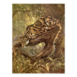 Vintage Wild Animal, Clouded Leopard by CE Swan Print