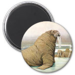 Vintage Wild Animal, Walrus Iceberg in the Arctic Refrigerator Magnet