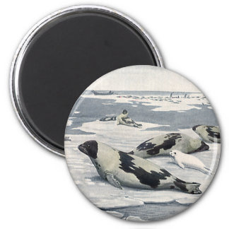 Vintage Wild Animals, Artic Harbor Seals Icebergs Magnet