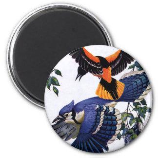 Vintage Wild Animals Birds, Blue Jays Flying 2 Inch Round Magnet