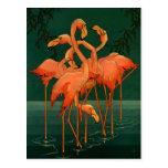 Vintage Wild Animals Birds, Pink Flamingos Tropics Postcard