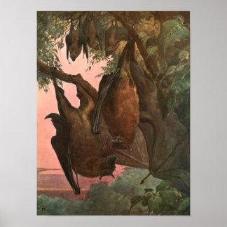 Vintage Wild Animals, Flying Fox Bats by Austen Poster