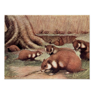Vintage Wild Animals, Hamsters by Louis Sargent Poster