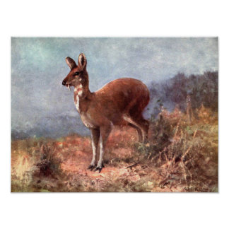 Vintage Wild Animals, Musk Deer by CE Swan Poster