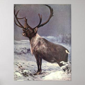 Vintage Wild Animals, Reindeer Caribou by CE Swan Poster