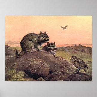 Vintage Wild Animals, Vizcachas by Winifred Austen Poster