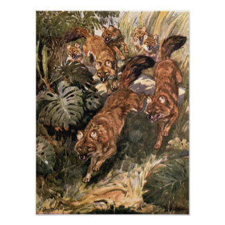 Vintage Wild Dogs, Dholes by Winifred Austen Poster