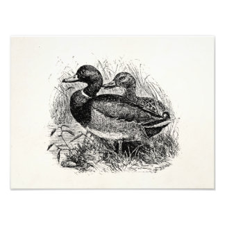 Vintage Wild Mallard Ducks Personalized Template Photo Print