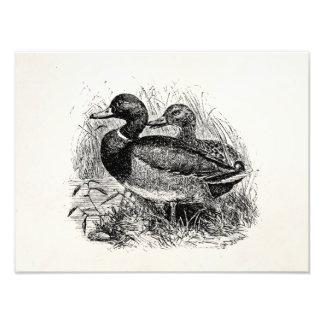Vintage Wild Mallard Ducks Personalized Template Photo
