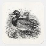 Vintage Wild Mallard Ducks Personalized Template Square Sticker