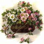 Vintage Wild Roses Acrylic Cut Outs