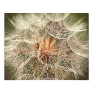 vintage wildflower macro photo print