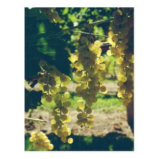 Vintage Winery Grapes Postcard