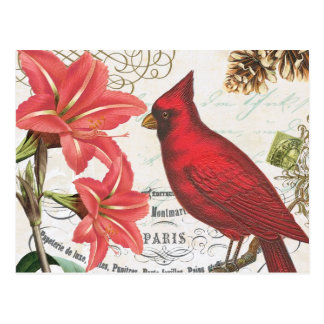 vintage winter cardinal postcard