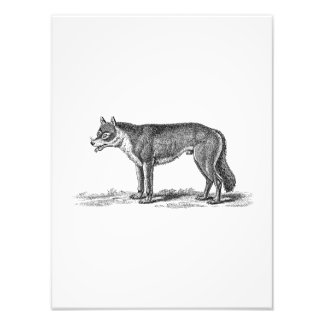 Vintage Wolf Illustration - 1800's Wolves Template Photo Print