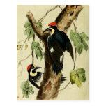 Vintage Woodpecker Bird Postcard