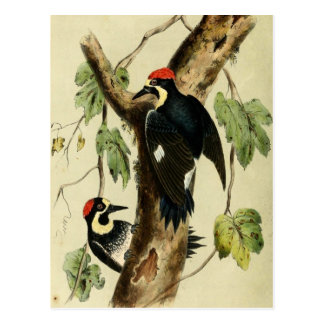 Vintage Woodpecker Bird Post Card
