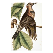Vintage Woodpecker Bird Print Stationery