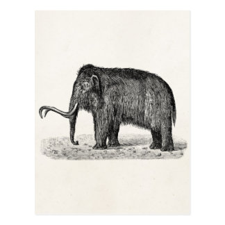 Vintage Woolly Mammoth Illustration Wooly Mammoths Postcard