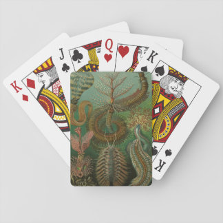 Vintage Worms Annelids Chaetopoda by Ernst Haeckel Playing Cards