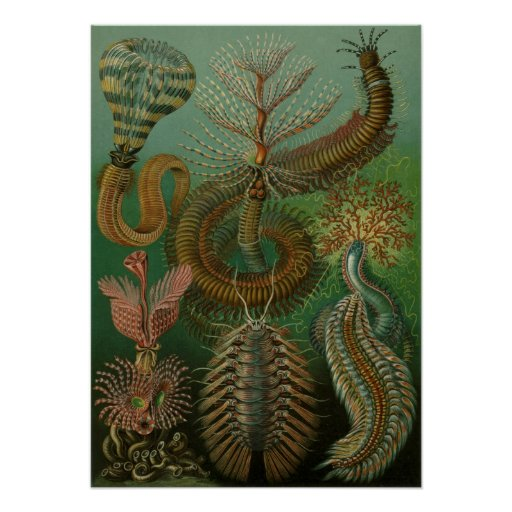 Vintage Worms Annelids Chaetopoda by Ernst Haeckel Poster