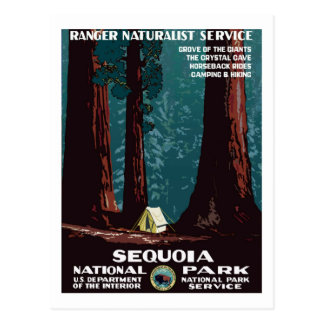 Vintage WPA Camping in Sequoia National Park Postcard