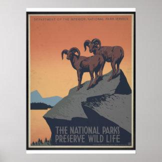 Vintage WPA National Parks Poster Circa 1940