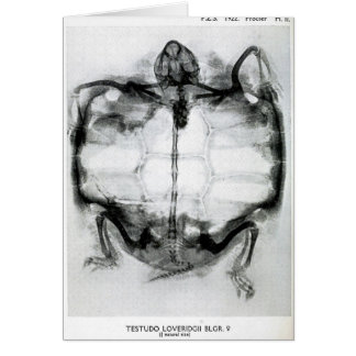 Vintage X-Ray of Turtle Card