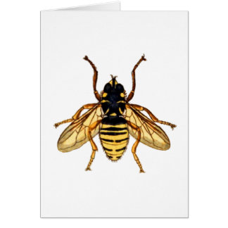 Vintage Yellow Bee Card