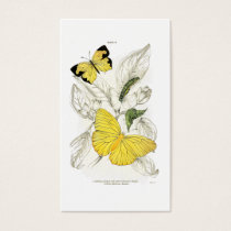 Vintage Yellow Butterflies   Vintage Insects Business Card