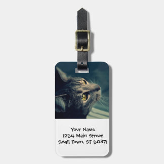 Vintage Yellow-Eyed Cat looking up Above Tag For Bags