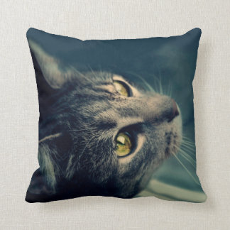 Vintage Yellow-Eyed Cat looking up Above Pillows
