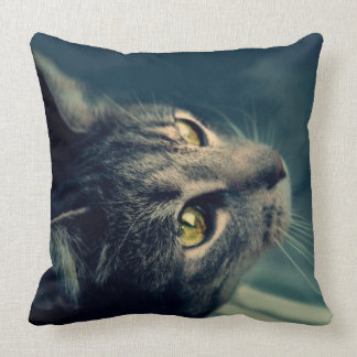 Vintage Yellow-Eyed Cat looking up Above Pillow