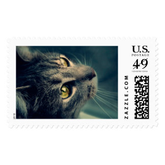Vintage Yellow-Eyed Cat looking up Above Postage Stamp