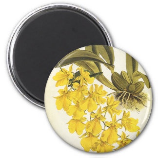 Vintage Yellow Oncidium Orchid, Tropical Flowers Magnet