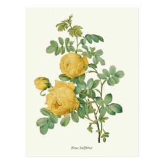 Vintage Yellow Rose Botanical Print Postcard