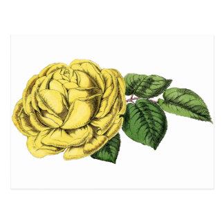 Vintage Yellow Rose Postcard