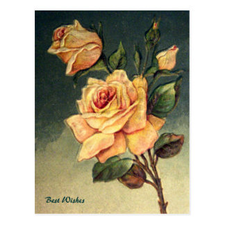 Vintage Yellow Roses Postcard