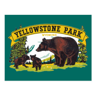 Vintage Yellowstone National Park with Brown Bears Post Card