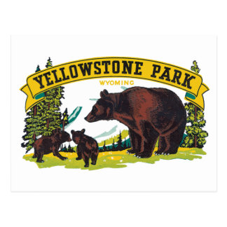 Vintage Yellowstone National Park with Brown Bears Postcard
