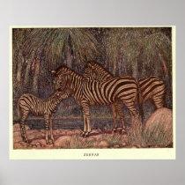 Vintage Zebra Painting (1909) Poster
