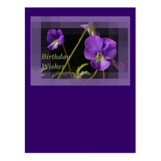 Viola Birthday Wishes Post Card