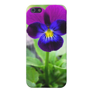 Viola Case iPhone 5/5S Covers