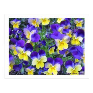Viola cornuta postcard