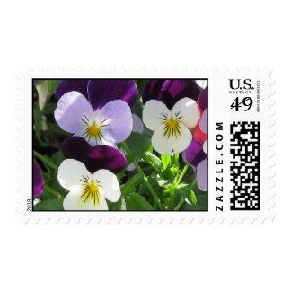 Viola Flowers Stamp