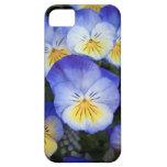 Viola iPhone 5 Case-Mate Funda