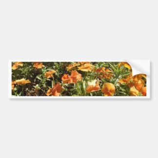 Viola Panola Deep Orange Bumper Sticker