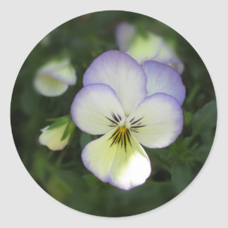 Viola Pansy ~ Lavender Cream Classic Round Sticker