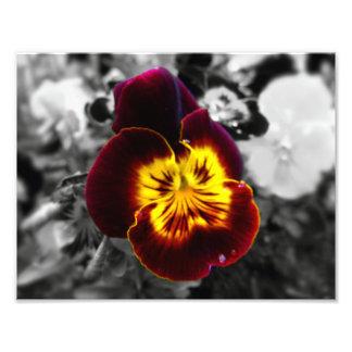 Viola Photo Print
