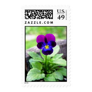 Viola Postage